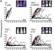 Fig 2. Differential in vivo antitumor potency of tumor-specific human primary T cells overexpressing IL-2, IL-7, IL-15, or IL-21.