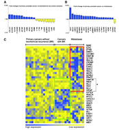 Fig 3. Microarray epigenetic gene expression in primary and metastatic prostate cancers.
