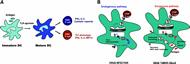 Fig 3. DC undergo activation after ligation of TLR and prime CD4+ and CD8+ T cells.
