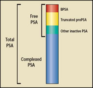 Fig. 1. Schematic overview of PSA and isoforms.