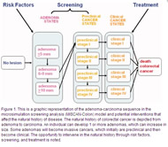 Fig 1. This is a graphic representation of the adenoma-carcinoma sequence in the microsimulation screening analysis (MISCAN-Colon) model and potential interventions that affect the natural history of disease.