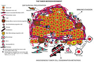 Fig 1. Tumor heterogeneity: crosstalk between tumor cells and nontumor cells.