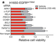 Fig 1. Mutant EGFR oncogene dependence requires downregulation of the FAS-NF-κB pathway.