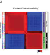 Fig 1a. Identification of a CIMP by clustering of breast cancer samples.