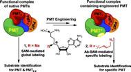Fig 1. Schematic description of Bioorthogonal Profiling of Protein Methylation (BPPM).
