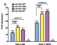 Fig 2. Mutational analysis of the mir-451 hypervariable stem position.