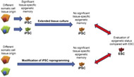 Fig 3. Approaches to erasing tissue-specific epigenetic memory and evaluating the resulting pluripotent stem cells.
