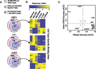 Cell-type–specific sequence models can predict cell-type–specific binding at loci that are DNase accessible in both cell lines.