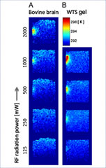 Fig 1. Thermal images corresponding to power levels of 125, 250, 500, 1000, and 2000 mW and irradiation times of 12 min in a 5-mm slice taken in the center of imaging slab (IP1).