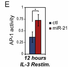 Fig 6. Stable miR-21 represses PDCD4 and enhances AP-1 activity upon growth-factor restimulation. (E)AP-1 activity measured 12 h following IL-3 restimulation, as in C, using a reporter containing 6 tandem AP-1 binding sites upstream of firefly luciferase.