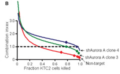 Fig 7b. Effects of aurora A shRNA knockdown on combined paclitaxel/pazopanib synergy.