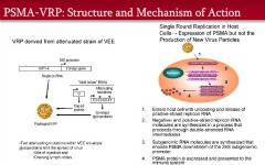 Fig 1. Derivation and mechanism of action of viral replicon particles (VRP) used in the study.
