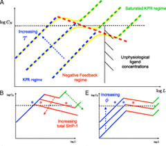 Fig 2.Summary of parameter dependencies and digital/analog response for the deterministic system. (A, B, and E)
