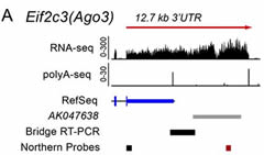 Fig 1a. Experimental strategy to test connectivity between a protein-coding gene and a downstream lincRNA.