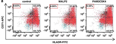 Fig 4. Effect of TLR2 activation in in vitro-cultured primary normal BM CD34+ cells. (a) Flow cytometry analysis of normal CD34+ cells after being treated with MALP2 or PAM3CSK4 for 48 h. Compared with control, treatment resulted in a decreased percentage of early erythroid progenitor cells marked with CD71+ and HLA-DR.