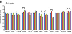 Fig 4. HDAC4 knock-down does not rescue global transcriptional dysregulation. (B) Taqman qPCR validation of the genes that were predicted to be differentially expressed between R6/2 and Dble::R6/2 cortex at 9 wk of age. See Table S3 for gene abbreviation definitions.