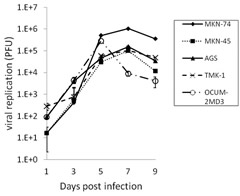 Fig 2. In vitro quantification of viral replication by GLV-1 h153 in human gastric cancer cell lines.