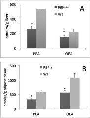 Fig 1. Palmitoylethanolamide (PEA) and oleoylethanolamide (OEA) levels in liver (A) and adipose tissue (B) of RBP−/− or wild type mice.