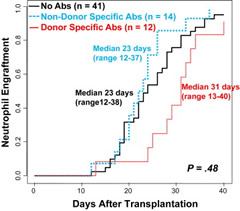 Fig 1. Cumulative incidence of sustained donor engraftment according to the presence of HLA-Abs after myeloablative conditioning (n = 67). The presence of pre-existing HLA-Abs (nonspecific or donor-specific) did not influence the cumulative incidence of sustained donor neutrophil engraftment.