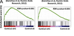 Fig 3. Csnk1a1 suppression activates a p53 response. (A) In leukemia cells with shRNA-mediated suppression of Csnk1a1, p53 signatures are enriched by GSEA