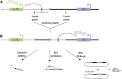 A Single Enhancer Rearrangement Deregulates Two Oncogenic Drivers.