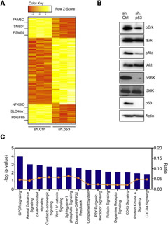 Knockdown of Mutant p53 in Pancreatic Cancer Cells Alters a Myriad of Genes and Pathways.