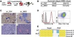 In Vivo CRISPR/Cas9 Confirmed that Mll3 Is a Haploinsufficient Tumor Suppressor in AML.