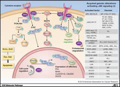 Fig 1. Overview of molecular JAK signaling.