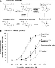Fig 1. dAd5GNE generated anticocaine antibody specificity for cocaine compared with cocaine metabolites.