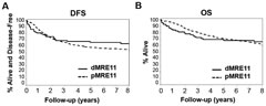 Fig 3. Tumor MRE11 status is significantly prognostic for DFS and OS.  (A) Disease free survival for dMRE11 (n = 70; events = 24); 5-yr rate: 67% (95% CI: 56–79%) vs. pMRE11 (n = 555; events = 240); 5-yr rate: 59% (95% CI: 55–63%). (B) Overall survival for dMRE11 (n = = 70; events = 23); 5-yr rate: 68% (95% CI: 58–80%) vs. pMRE11 (n = 555; events = 194); 5-yr rate: 71% (95% CI: 67–75%).