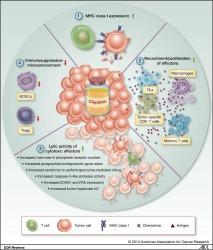 Fig 1. Preclinical evidence demonstrates that CDDP-induced antitumor immunomodulation occurs via four mechanisms. TIL, tumor-infiltrating lymphocytes.