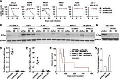 Fig 1. NRAS/Nras expression is required for maintenance of AML harboring oncogenic mutations.