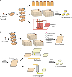Fig 2. Retroviral and lentiviral vectors' manufacturing platform.