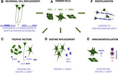 Fig 1. Mechanisms of Stem Cell-Based Brain Repair.