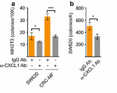 Fig 4. Induction of anchorage-independent growth by SW620 and CRC-MF conditioned media was dependent on CXCL1.
