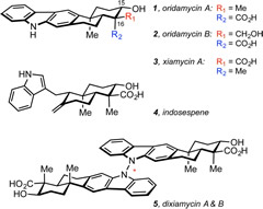 Fig 1. Selected members of the oridamycin and xiamycin families.