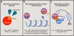 Fig 1. Strategies for Targeting Epigenetic Regulators.