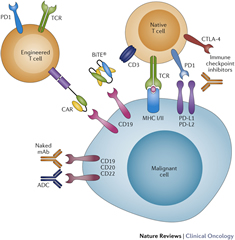 Fig 1. Mechanisms of action of immunotherapy modalities.