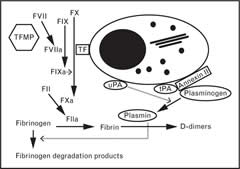 Fig 1. Simplified schema of the coagulopathy associated with APL.