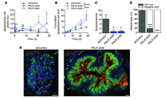 Fig 4. PKLR promotes metastatic cell survival in the tumor core.