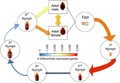 Fig 1. The bed bug life cycle and developmental gene expression profile.