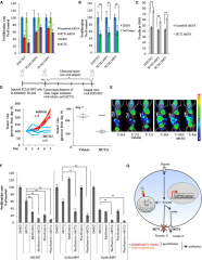 Fig 4. MCT1 Loss-of-Function Reduces Breast Cancer Cell Proliferation and Tumor Growth.