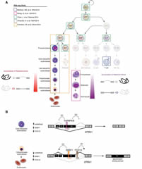 Fig 1. RNA-seq studies of hematopoiesis reveal stage-specific regulation of splicing during normal hematopoiesis.
