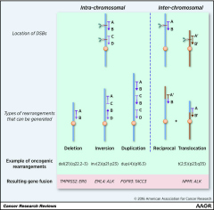Fig 1. Modeling oncogenic chromosomal rearrangements by genome editing.