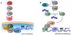 Fig 1. Mechanisms establishing CpG island methylator phenotype (CIMP) in colorectal cancer.