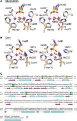 Fig 1. Dbr1 is a metallophosphoesterase.