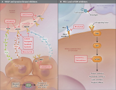 Fig 1. Pathways and Current Drugs in Metastatic Renal-Cell Carcinoma.