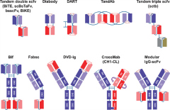 Fig 1. Different bispecific antibody formats.