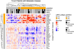 Fig 2. Heat map showing hierarchical clustering analysis of the gene expression profiles of the ClearCode34 genes in metastatic renal cell carcinoma TCGA tumors (n = 54).