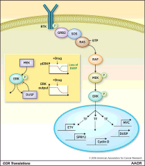 Fig 1. The stepwise activation of ERK signaling results in the transcriptional activation of genes responsible for cell-cycle progression and feedback regulation.